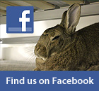 Find My House Rabbit on Facebook