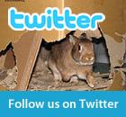 Follow My House Rabbit on Twitter