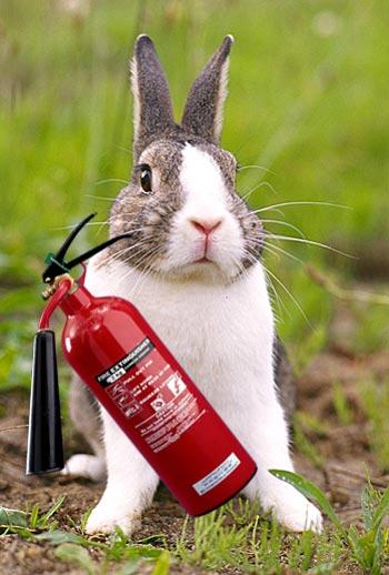 fire-bunny.jpg