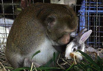 rabbitmonkey.jpg