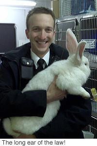 Tiny the giant bunny