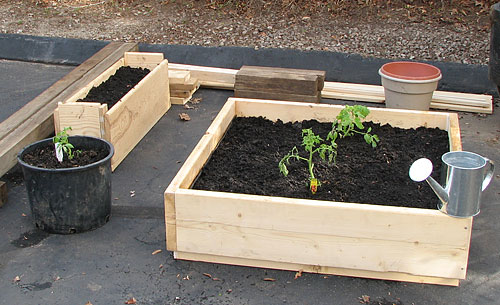 Container gardening for rabbits