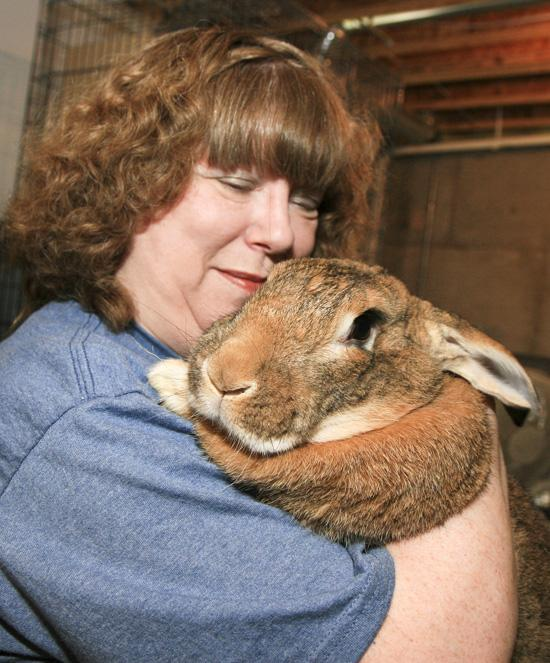 Joy Gioia and Rembrandt, a flemish giant rabbit.