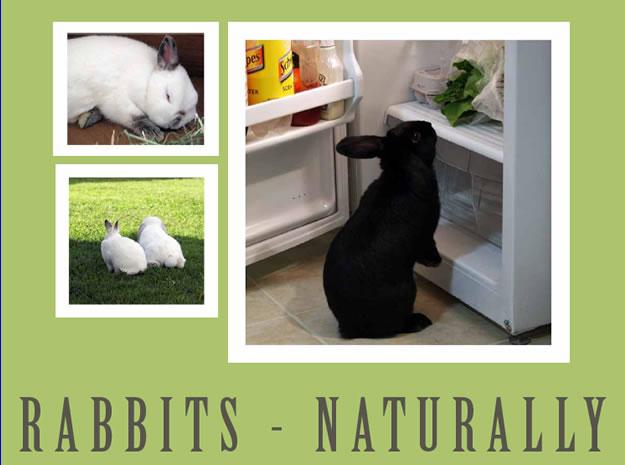 rabbitcalendar