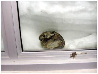 Rabbit in window
