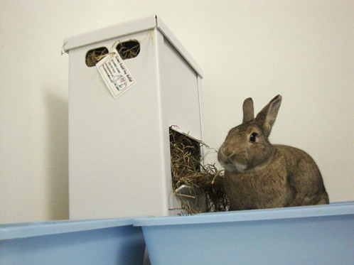Cos eating out of the Screwy Rabbit Hay Buffet