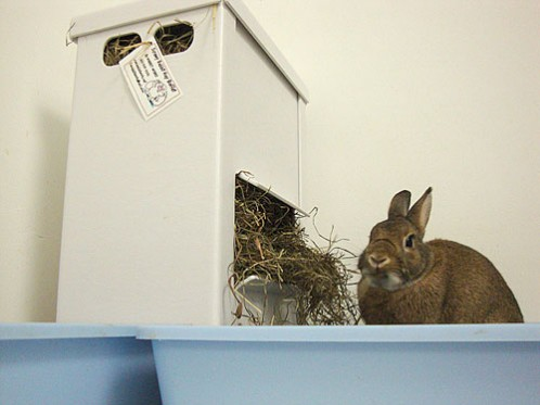 Coco eating out of the Screwy Rabbit Hay Buffet