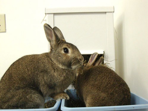 Cos and Coco eating out of the Screwy Rabbit Hay Buffet