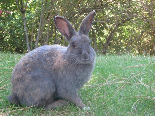 Bunny on UVic campus