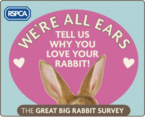 Great Big Rabbit Survey