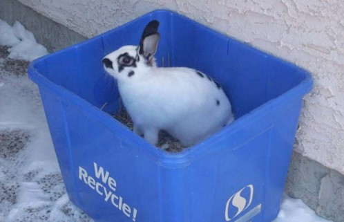 Rabbit discovered in recycle bin by Hamel family