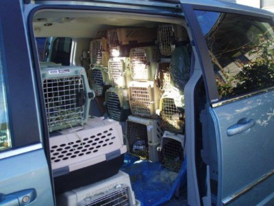 Batch of UVic bunnies on route to Texas