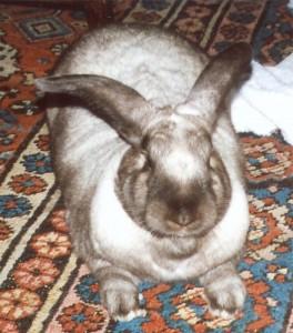 Rowley the rabbit