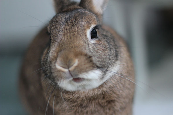 Rabbit with mouth open