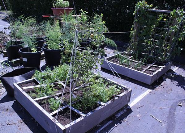 Garden cleaned up after Hurricane Irene