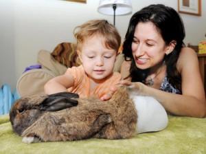 Rabbit with prosthetic bucket