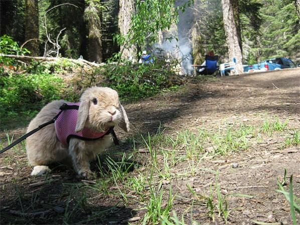 Rabbit camping