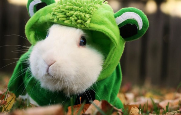 Rabbit in frog costume