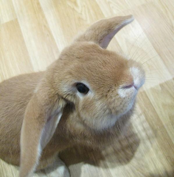 Rabbit looking up