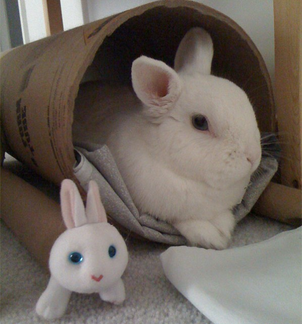 Rabbit and stuffed animal
