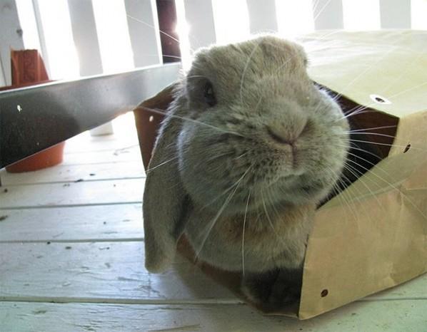 Rabbit in bag