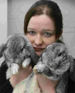 Two lop-eared rabbits
