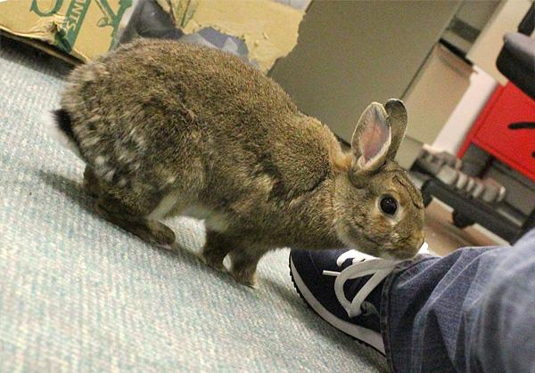rabbit sniffing leg
