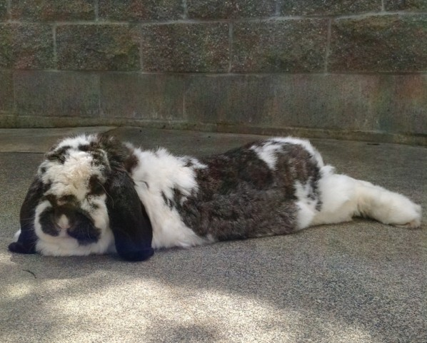 Special needs rabbit