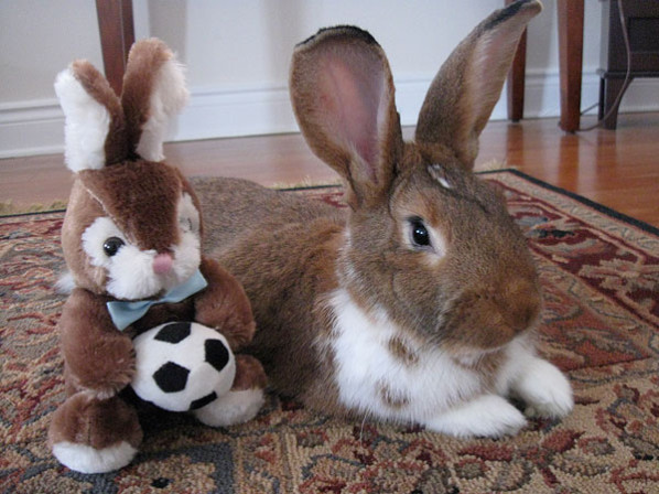 Rabbit and stuffed toy