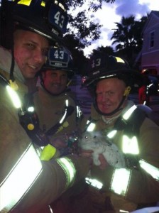Firefighters with rabbit