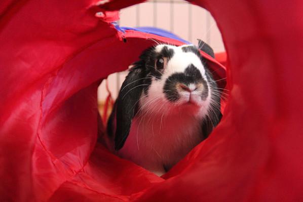 Rabbit in tunnel
