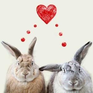 Two rabbits in love