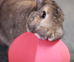 Rabbit with paper valentine
