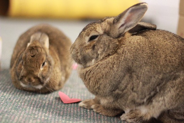 valentine's day archives - my house rabbit, Ideas