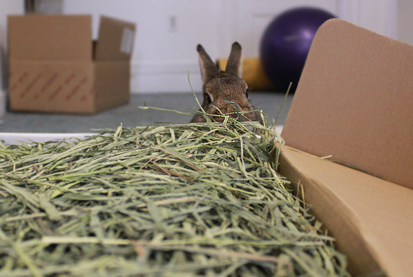 Coco eating hay