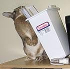 bunnyproof4