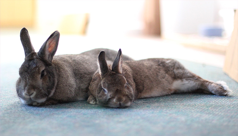 bonding and bonded bunnies essay Bonded for life by caroline charland some call it bunny bonding, others call it  bunny dating, and it is also known as the bonding ritual no matter what you.