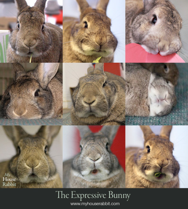 Faces of a rabbit
