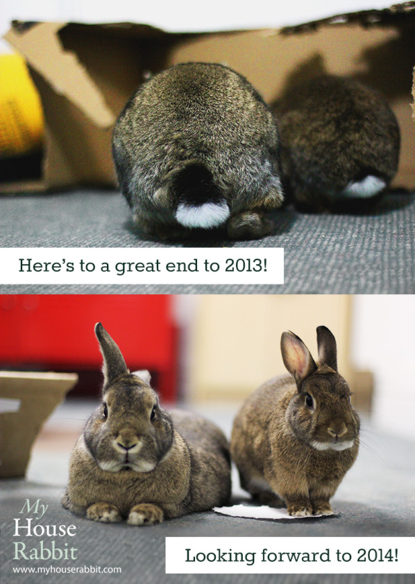 Happy New Year from My House Rabbit