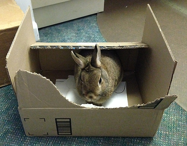 Bunny in a box