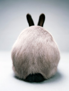 Rabbit butt
