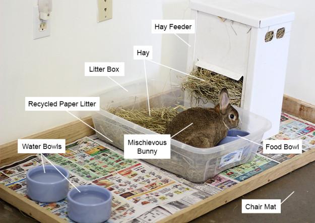 Indoor rabbit housing
