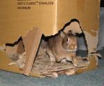 Conejo en castillo de carton