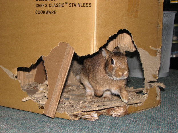 Rabbit in cardboard castle