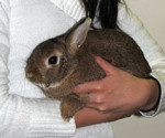 Holding a rabbit