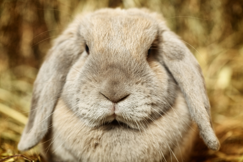 My Rabbit Hates Me | Rabbit Nipping