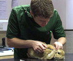 Vet giving rabbit myxomatosis vaccination