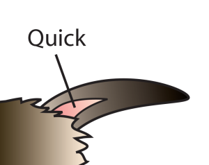 Diagram of a rabbit nail and quick
