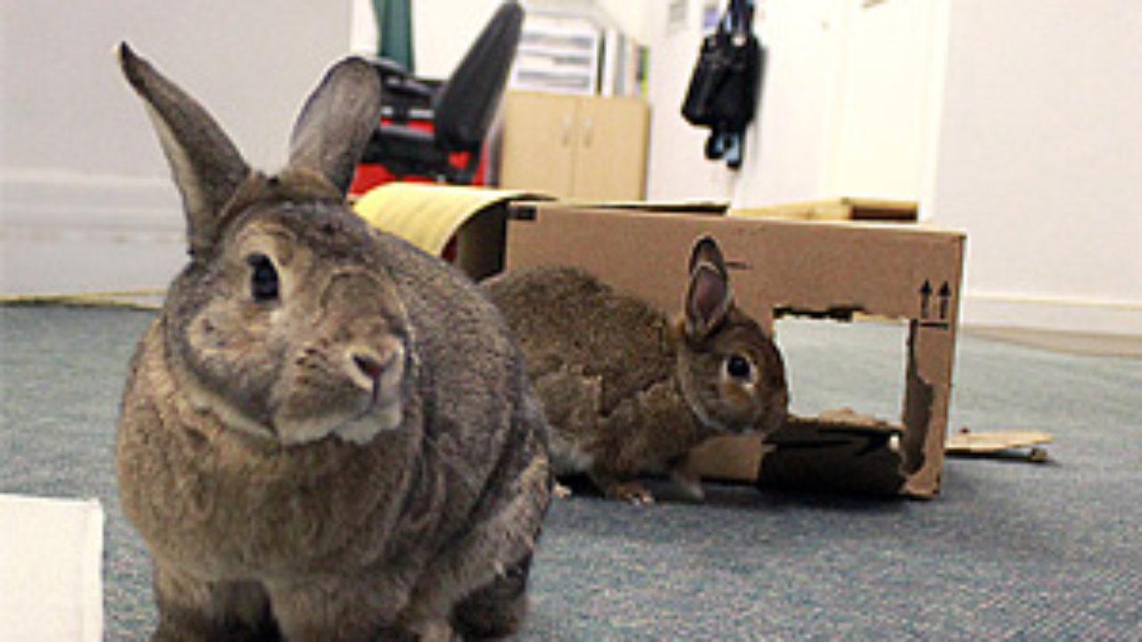 Basic Rabbit Care Guide