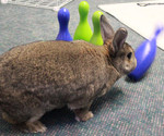 Rabbit playing with bowling pins